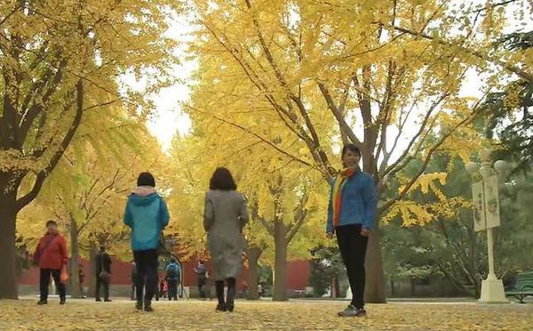 北京公园延扫秋叶 美景再持续两周