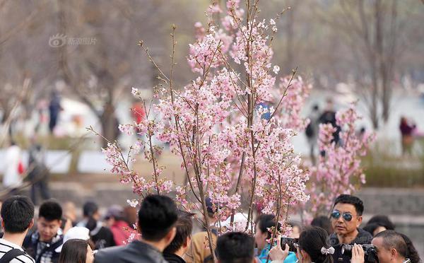 北京玉渊潭公园花开烂漫引游人