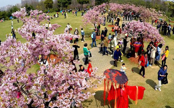 """上海樱花节玩""""穿越"""" 古装汉服秀个性"""