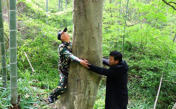 """江苏新发现25株""""植物大熊猫?#21271;?#21361;母树"""