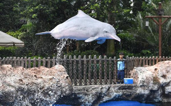 第二届中华白海豚保护宣传日在珠海启动