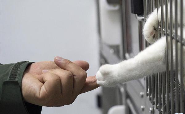 """武汉动物医院里的临时""""奶爸"""""""