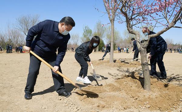 习近平参加首都义务植树活动