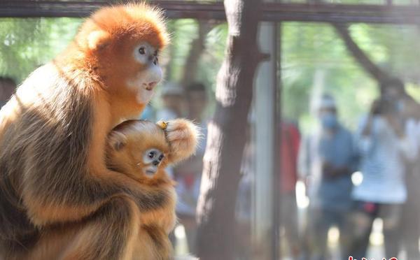 济南动物园新生动物亮相