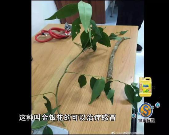 视频:男子治感冒网购金银花变断肠草 喝下险丧命