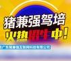 """广东驾校""""猪兼强""""破产"""