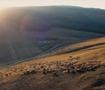 新疆30万头牛羊浩荡大迁徙