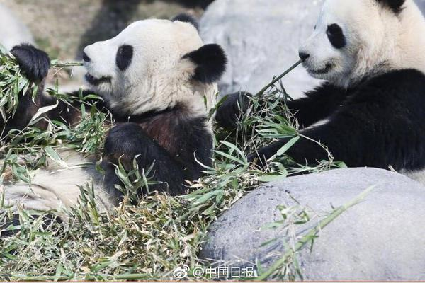 北京2021年春节烟花爆竹2月6日开卖,须实名登记购买