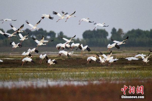http://video.scbfny.cn/news/8.html?kw=赤水头条新闻