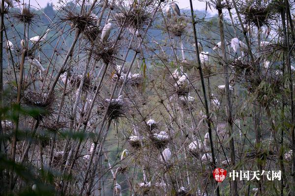 斗罗大陆第59集:唐三的身世被泰坦亲自揭晓,父亲唐昊却不知所踪