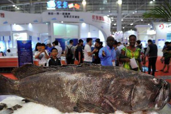 亚冠视频直播鲨鱼
