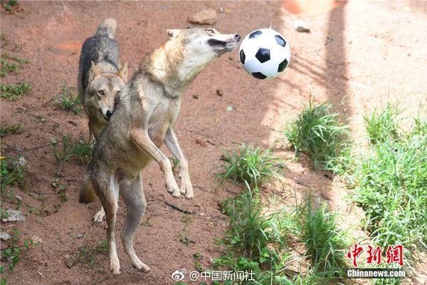 体育竟彩足球比分欧宝直播