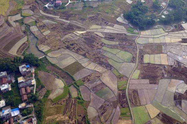 深圳:全产业链消费扶贫成气候