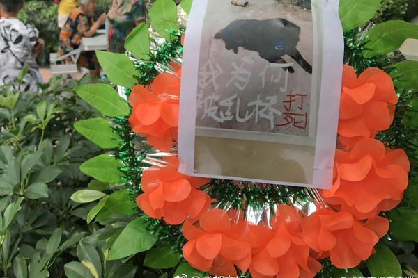 日本民众冒雨上街庆祝