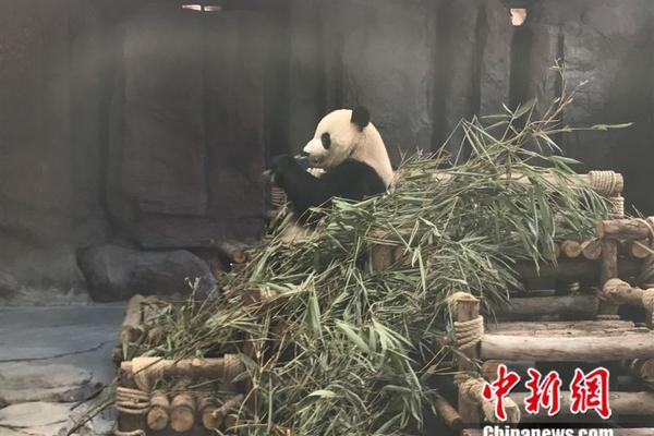 马斯克私人飞机已到上海:紧随东航起飞 中途超车