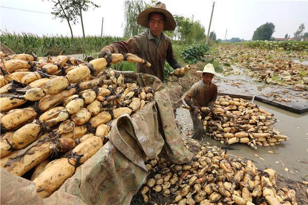 二手农业机械A65DBC8C-658669
