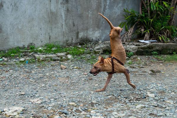 【沙巴sb体育正规】河南尉氏县靠抓阄来确定贫困户 2名村干部被撤职