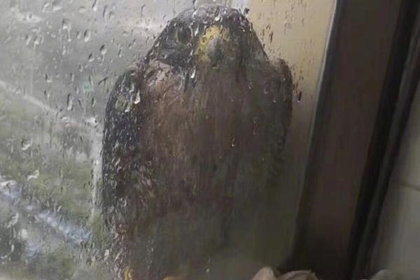 orion vpl sliding doors home lift