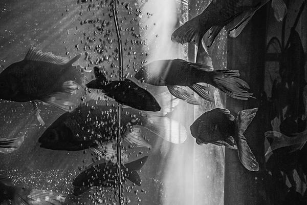 【u赢电竞登录页面】俄航事故:部分乘客逃生拿行李 致后舱乘客伤亡惨重