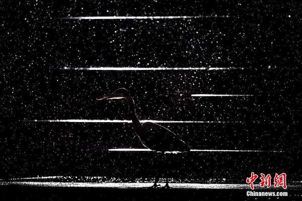 【诈金花都是同花】5月1号十二生肖运势指南