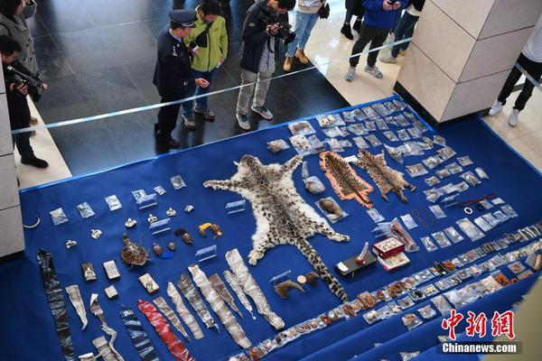 """寻访""""海龟天堂"""":中国最大的海龟产床什么样?"""