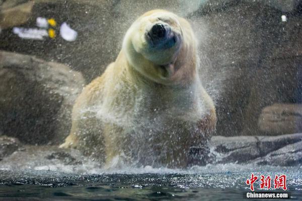 云南小朋友动物园体验饲养员工作