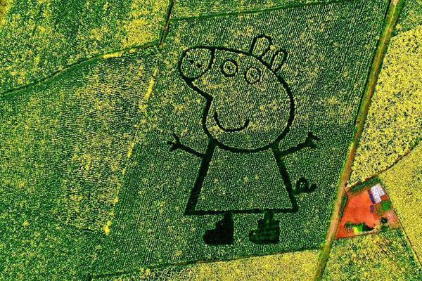 超星植物病害流行与预测考试答案