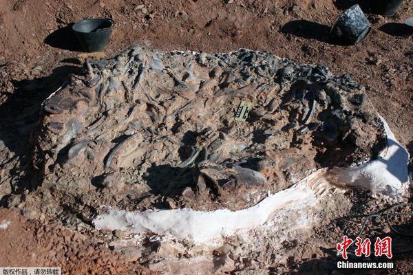 超350头大象在博茨瓦纳神秘死亡 科学家督促政府尽快检测