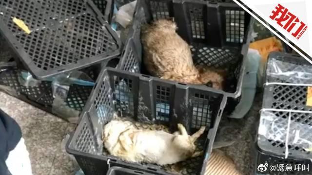 官方调查苏州宠物盲盒