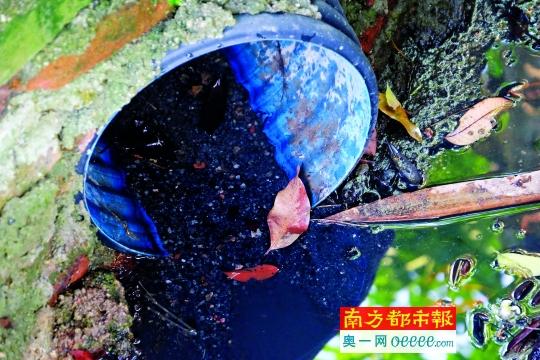龙潭村大围一个出水口。南都记者 李向新 摄