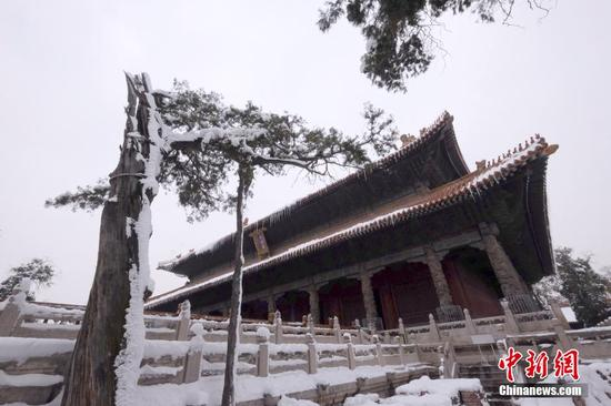 曲阜孔庙古树遭大雪破坏 系国际文化遗产