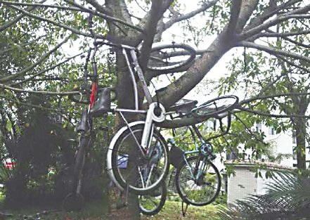 保安将乱停的自行车挂到树上 网友图