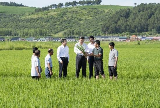 习近平在延边州和龙市东城镇光东村视察水稻长势。新华社记者 谢环驰 摄