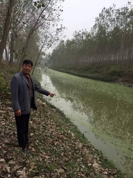 2015年10月22日,苏皖交界的宿州市杨庄乡,跨界河流郎溪河布满了蓝藻和浮萍,远远就能闻到河水的腥臭味。 新华社记者蔡敏 摄