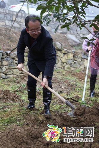 武隆县委书记何平正在用铁锹为刚种下的小树培土