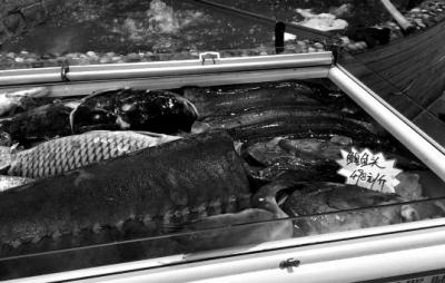 """2月16日,鱼类展示柜上新增了一个黄色纸壳价签,黑笔手写""""鳇鱼头498元/斤""""。"""