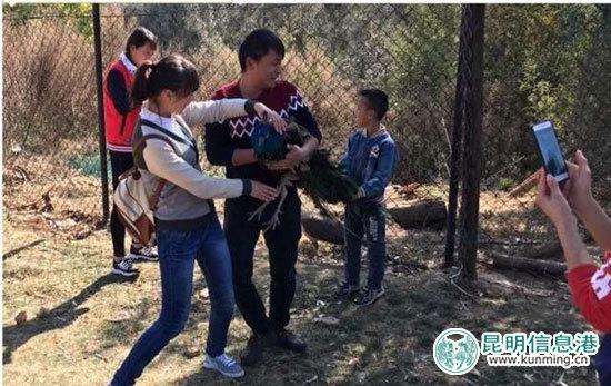 游客强行抱着孔雀照相。网络截图