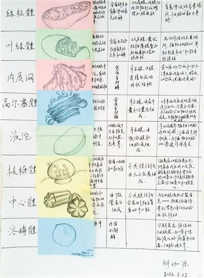 高三学霸生物笔记走红 手绘插图萌翻网友(图)