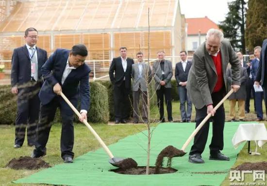 两国首脑独特种下银杏树苗 新华社记者 兰红光 摄