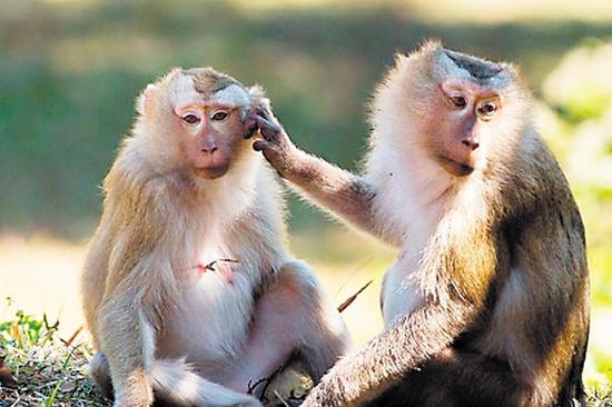 案发 宠物店查获113只野生食蟹猴