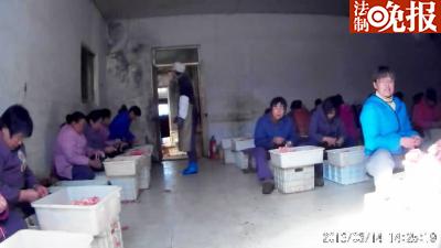 在山东龙口申河食品公司厂房内,女工未穿工作服,不戴手套、口罩手撕鱿鱼丝
