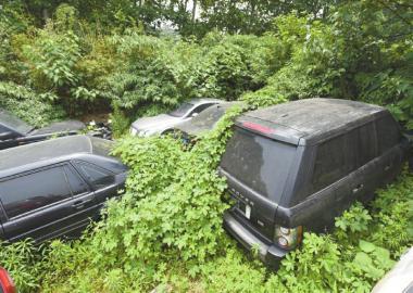 被杂草掩埋的车。