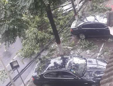 树倒车遭殃
