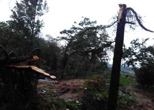西三环缔造路到南三环段,沿途很多行道树被风刮倒,有的树倒在路上,严峻影响了交通。