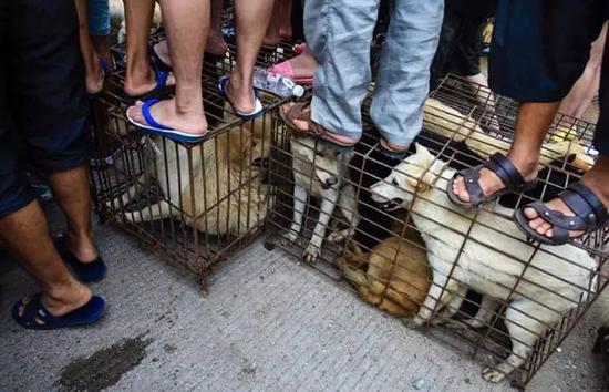 在玉林街头,被囚禁的狗。 图片来自网络
