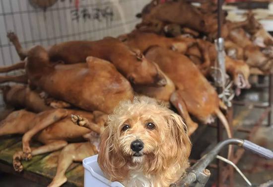 在玉林被宰杀的狗 图片来自网络