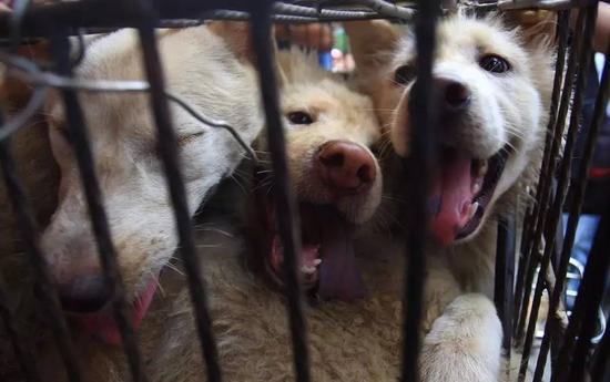 被关进笼子的狗  图片来自网络