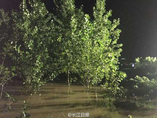 武汉新洲三店街宋渡村地势低的地方有的快淹到树顶