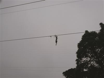 鱼竿的尖梢还挂在电线上。