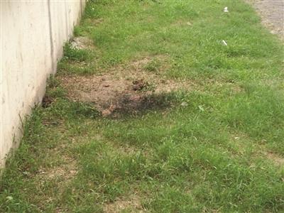 男孩被击倒的方位,草坪变得焦黑。